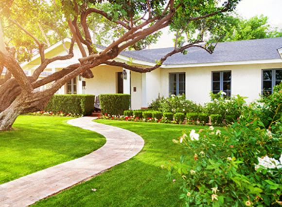 Rambler Home With A Large Tree And Winding Sidewalk